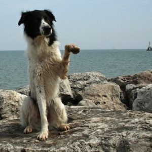 Dog Waving on Beach