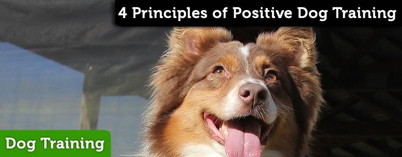 4 Principles of Positive Dog Training