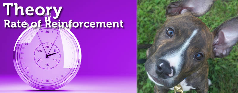 Rate of Reinforcement
