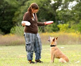 Artist and Dog Trainer in Fargo, ND