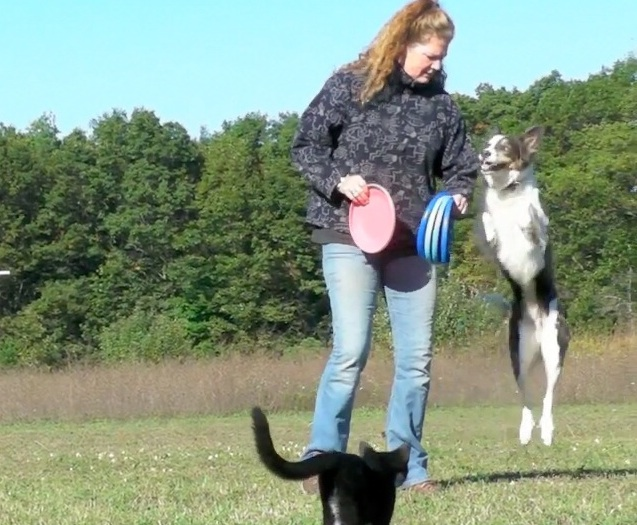 Disc Dogs and Stunt Kitty Rigler