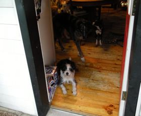 Dogs and Doors Training
