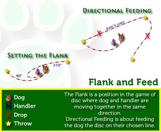 Disc Dog Flanking and Feeding
