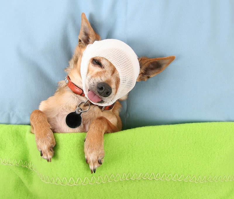 Dog Sport Injuries