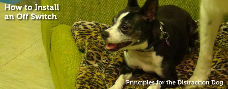 Principles for the Distraction Dog