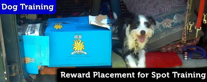 Reward Placement for Spot Training