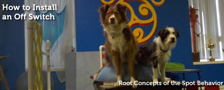 Root Concepts of the Spot Behavior