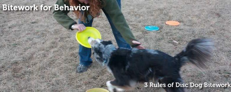 Three Rules of Disc Dog Bitework