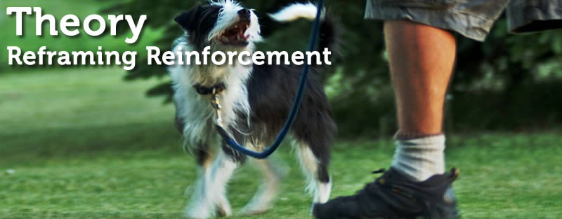 Reframing Reinforcement in Dog Training