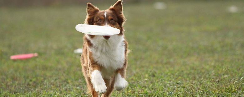 Flipping the Field for Toss and Fetch Retrieve Speed