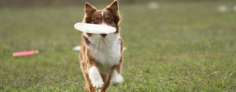 Flipping the Field for Faster Toss and Fetch
