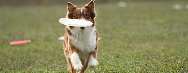 Faster Toss and Fetch Retrieve