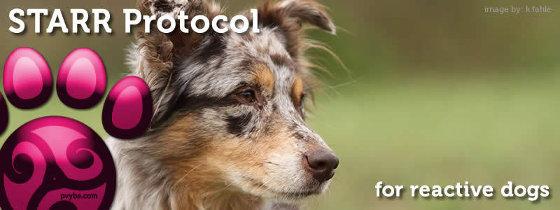 STARR Protocol for Reactive Dogs