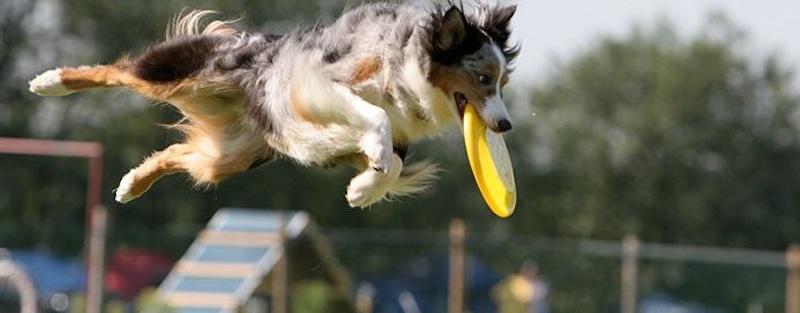 EZ Ryder Disc Dog Flip