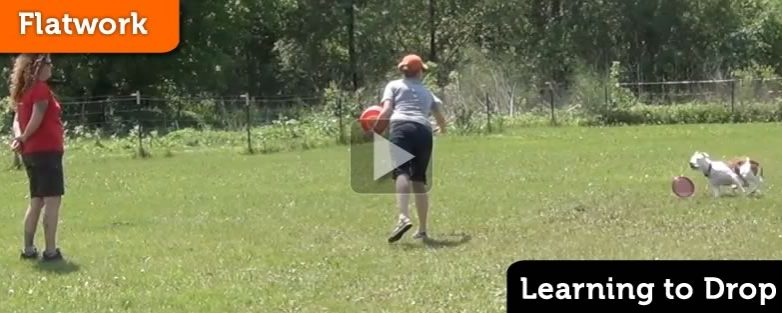 PVybe Disc Dog Camp – Learning to Drop