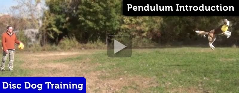 Pendulum Disc Dog Flatwork Pattern