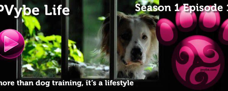 Pvybe Life Episode 1 – The Pilot Season's Pilot