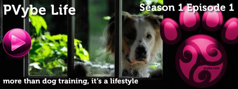 dog training variety show 1