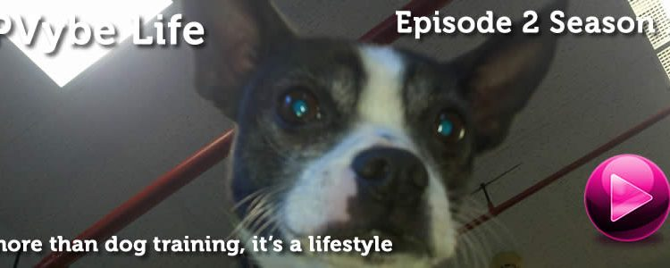 PVybe Life – Episode 2 Season 1 – Merry Christmas!