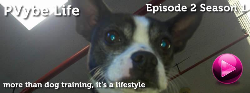 dog training variety show
