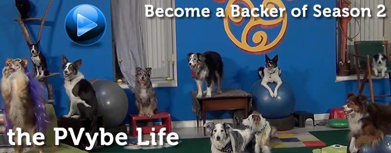 dog training and lifestyle show