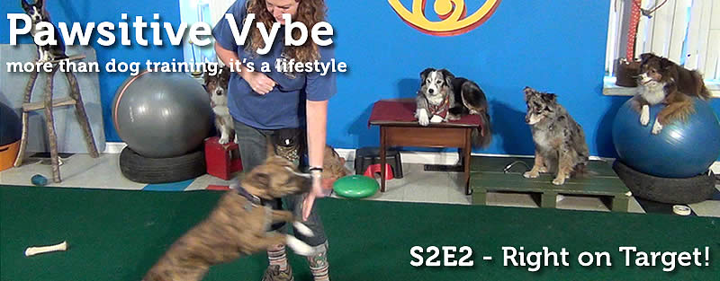 Pawsitive Vybe Season 2 Episode 2