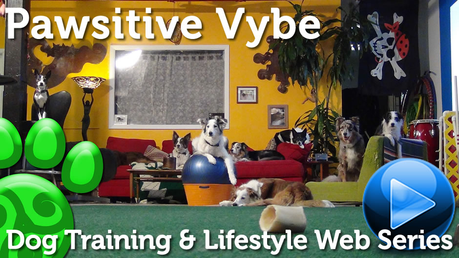 Pawsitive Vybe Dog Training Web Series