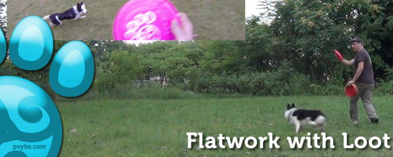 Disc Dog Flatwork Session with Loot