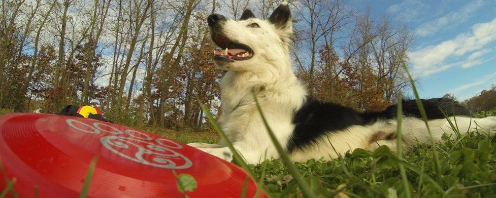 Go Do Dog Stuff: Seven Simple Ideas for Effective Dismissal