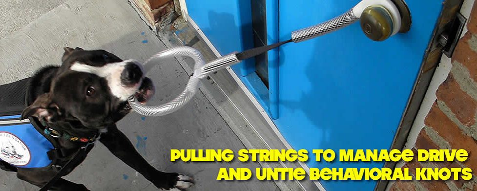 10 Strings to Pull to Manage Drive and Untie Behavioral Knots – Pt 2