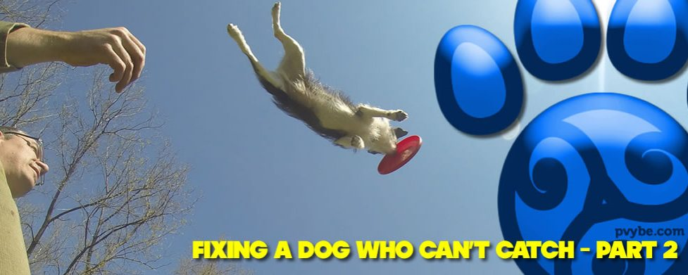 Fixing a Dog Who Can't Catch – Part 2