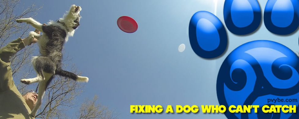 Fixing a Dog Who Can't Catch – Part 1 of 2