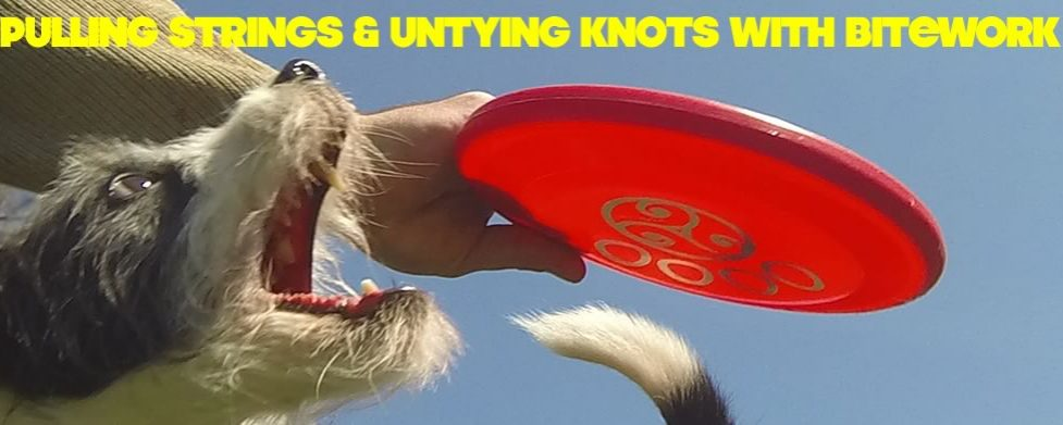 Pulling Strings and Untying Behavioral Knots with Bitework