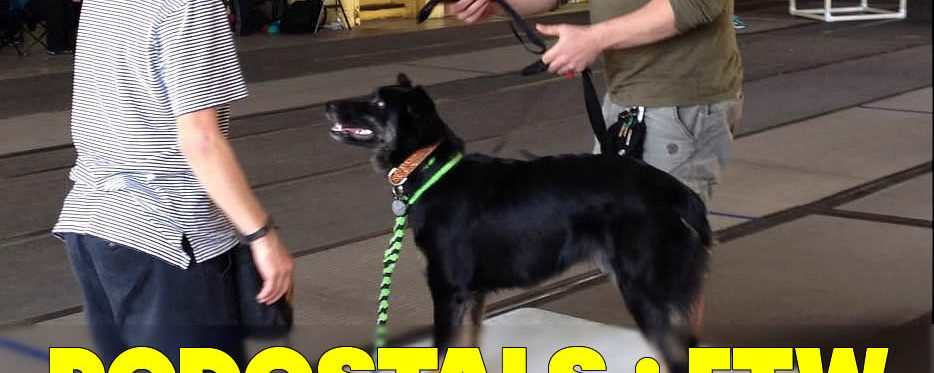 PVybe Disc Dog and Dog Sport Camp – Pedestals FTW