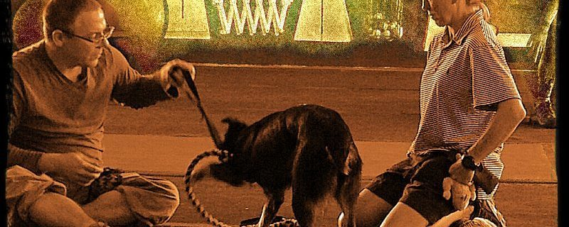 PVybe Dog Sport Behavior Camp – Organization