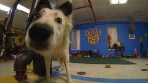 Dog Training Lifestyle