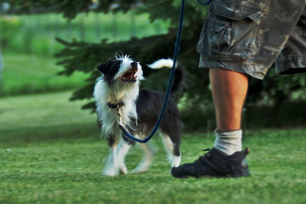 Dog Obedience Training in Kingston NY