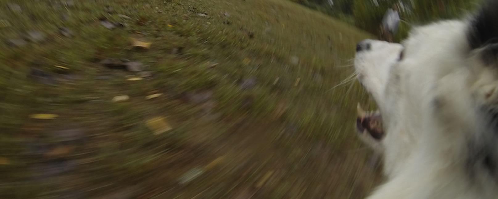 Disc Dog Jam Cam – POV Slow Motion