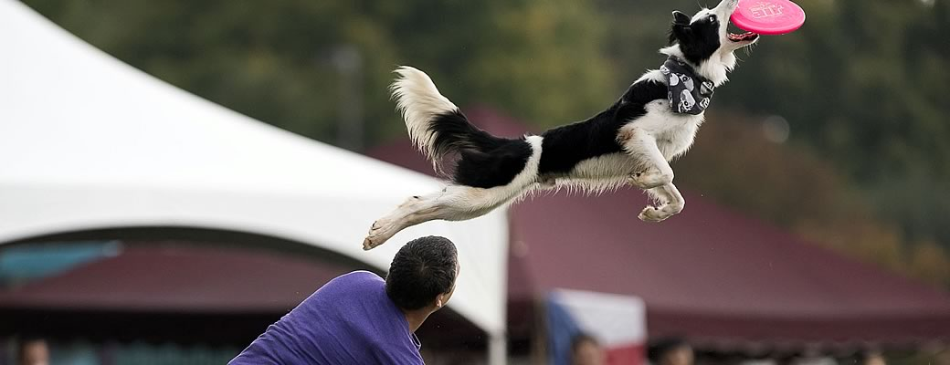 Disc Dog Classes