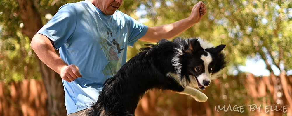 The Importance of 'Why' in Dog Training