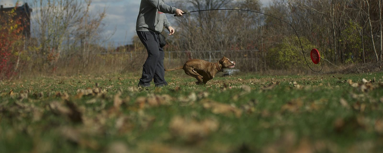 On Engagement in Dog Sports and Dog Training