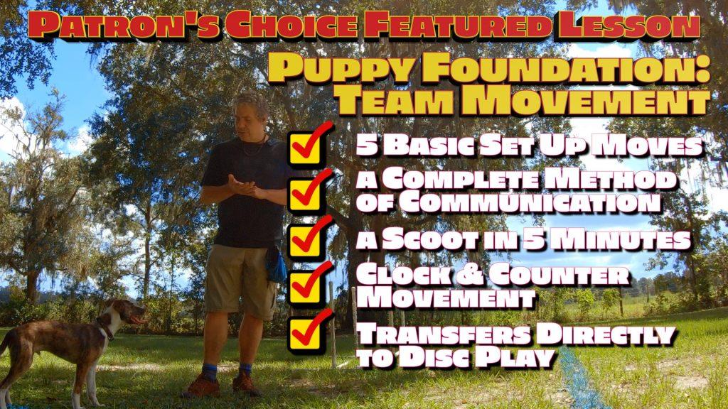 Disc Dog Puppy Team Movement