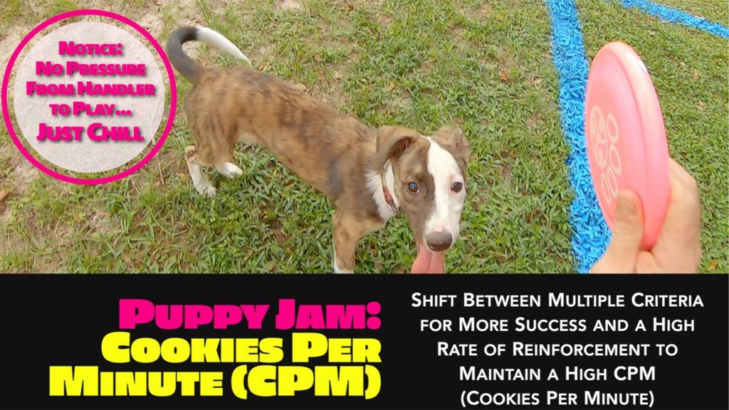 disc dog puppy jam