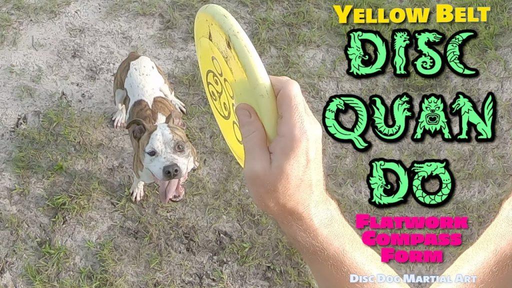 disc dog team movement