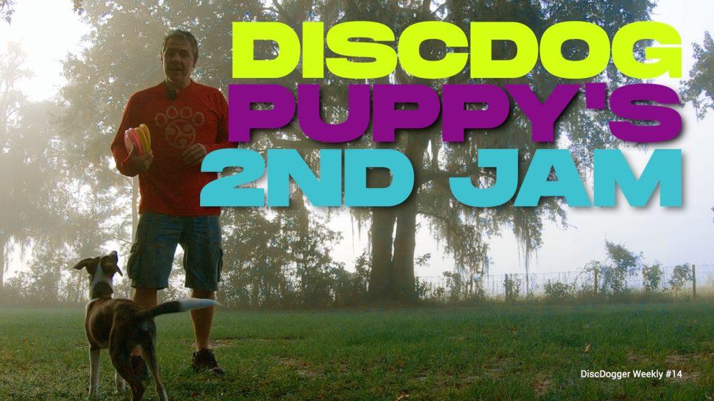 disc dog puppy training