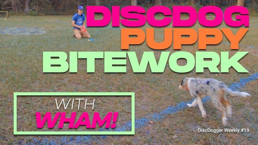 practical disc dog puppy bitework