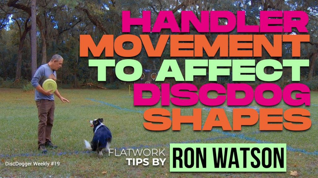 handler movement and disc dog shapes