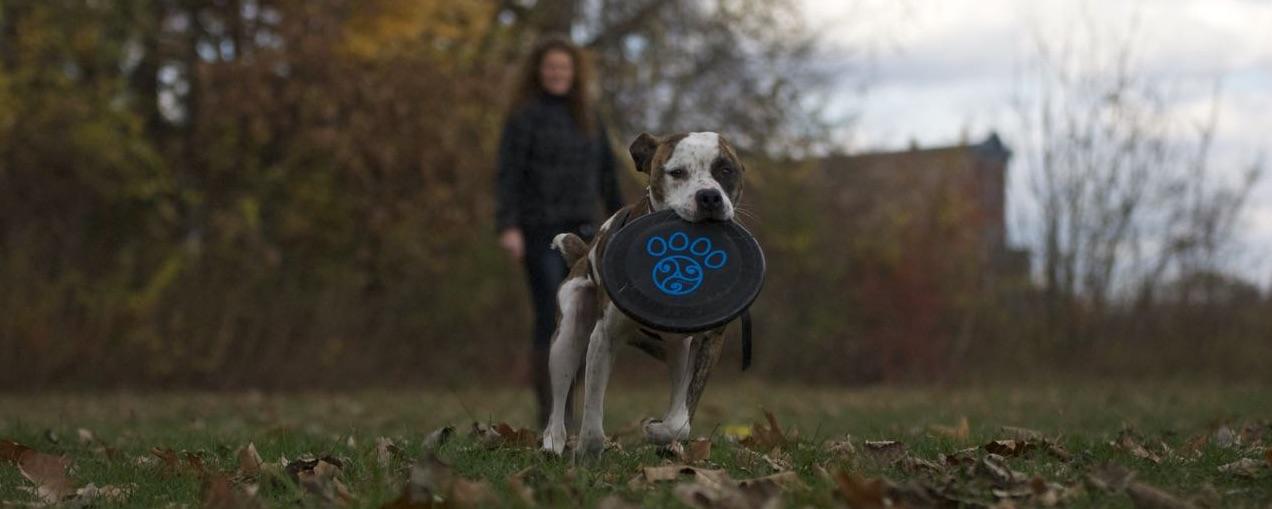 Disc Dog Foundation Class 2020